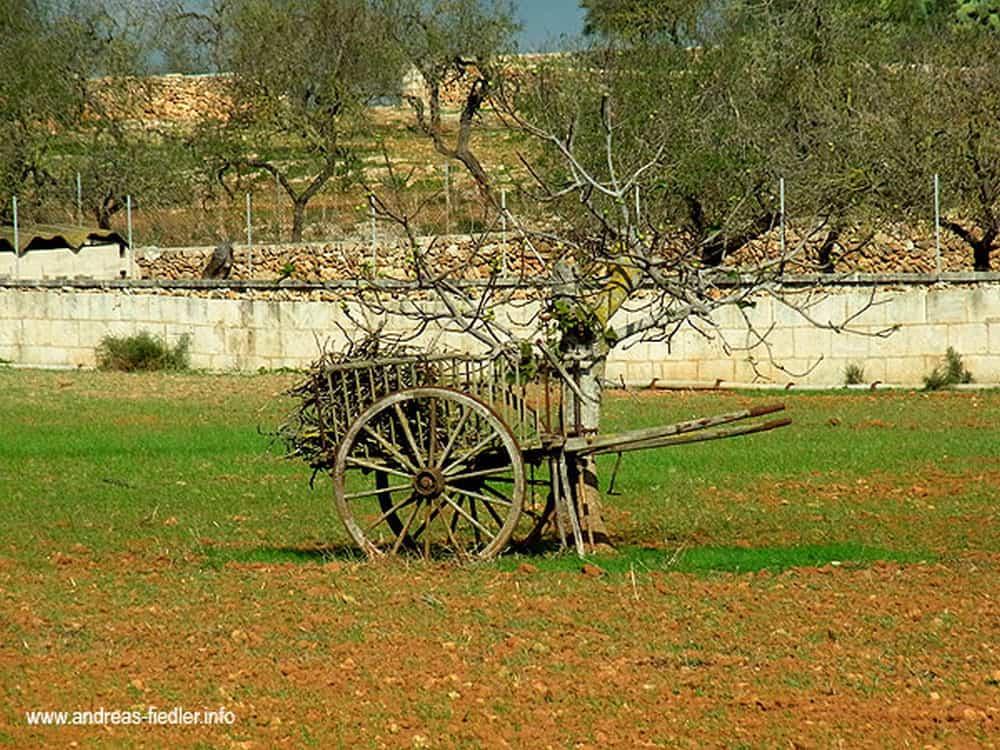 mallorca-reisebericht-387